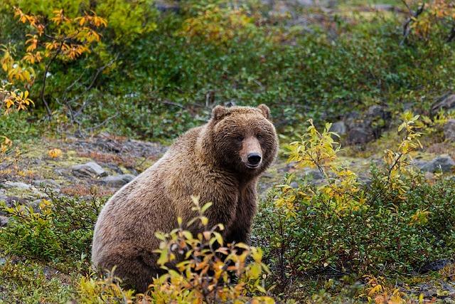 Bear Hunt Videos