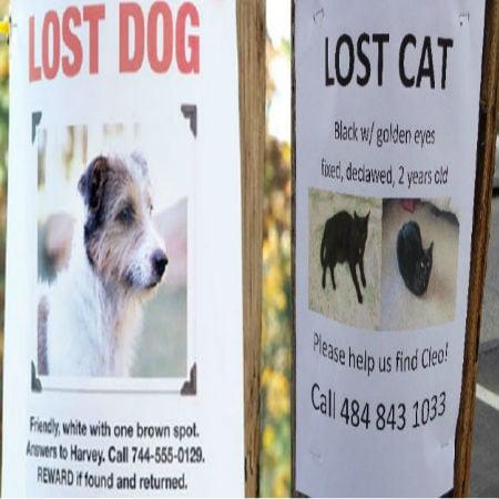 Lost Pet Statistics