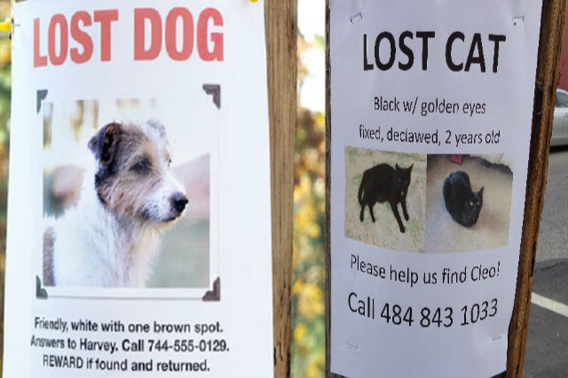 Search Dogs For Lost Pets