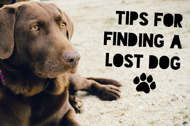 GPS Tracking Device for Dogs