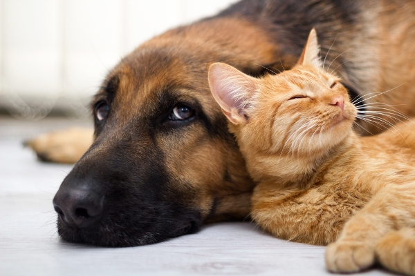 Cat and dog keeping safe