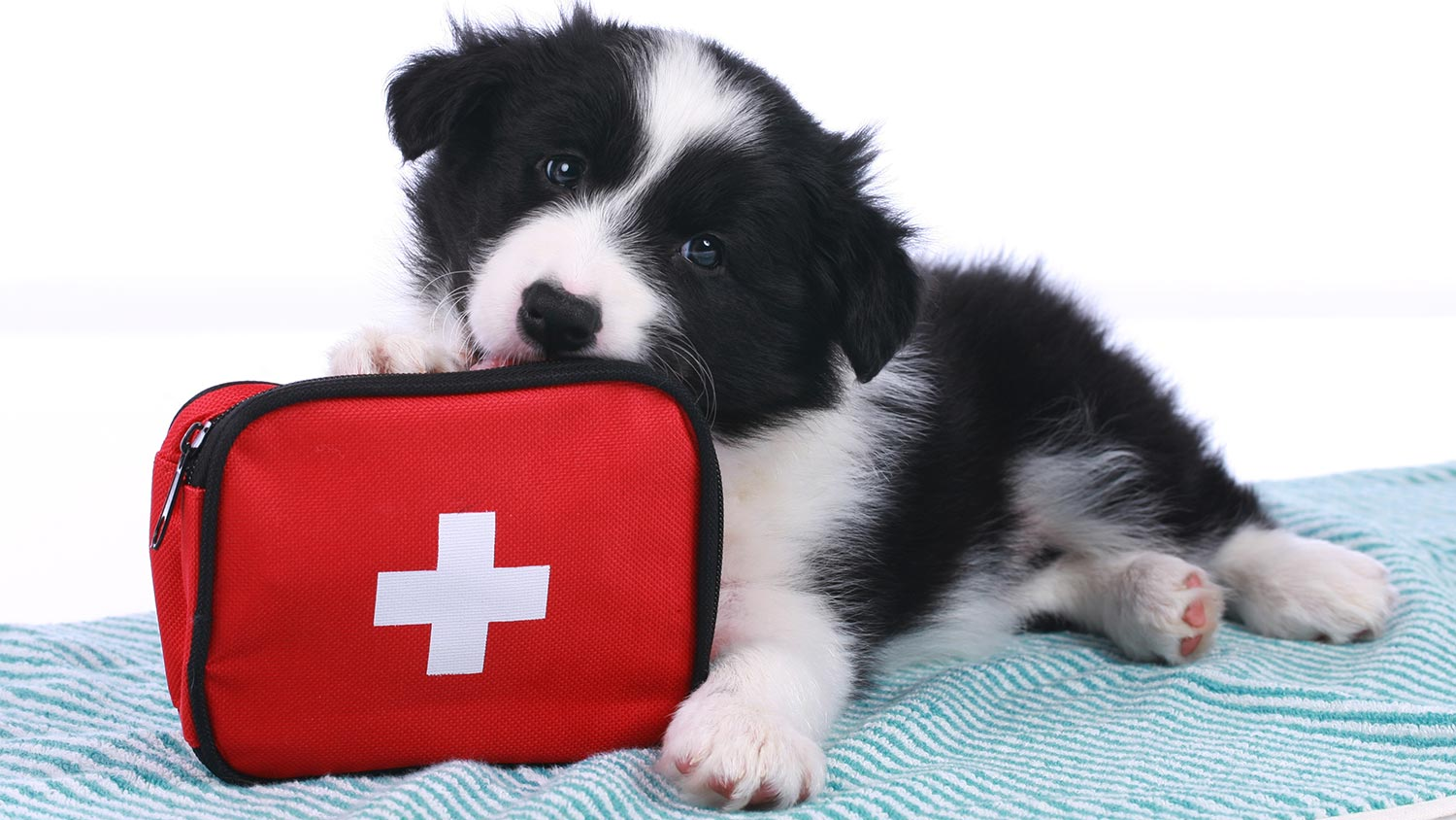 Prepare emergency kits in order for pet owners to keep pets safe