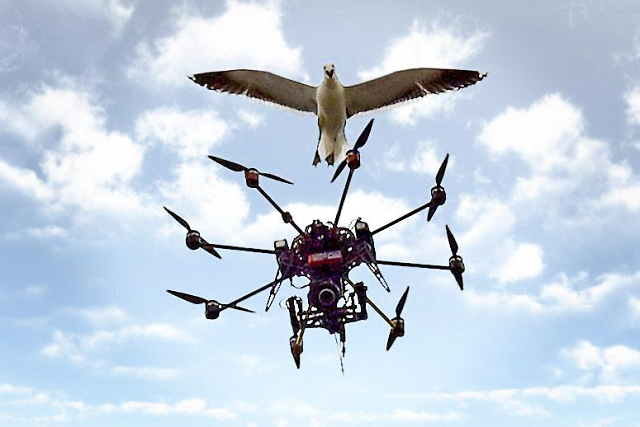 Drones on Wildlife