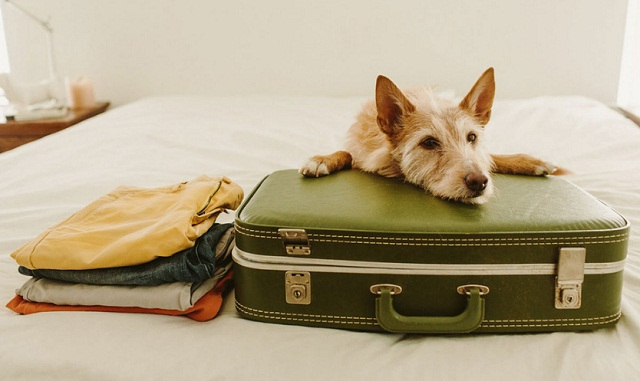 Traveling Tips for Dogs