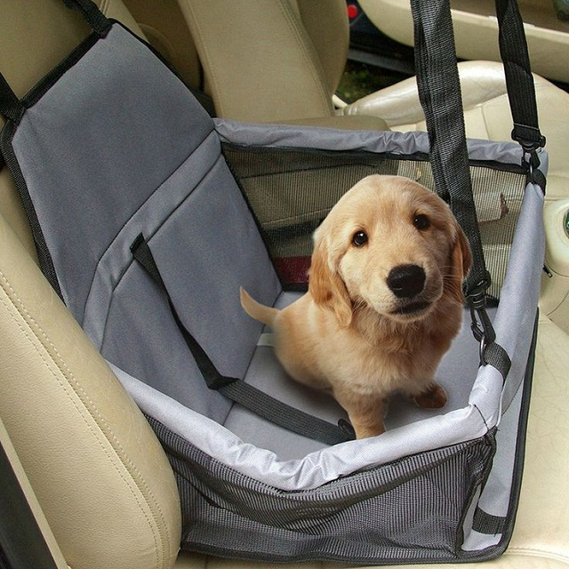 Safe Pet Travel Practices