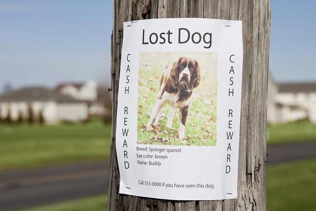 Post for Lost Dog