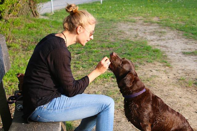 Pet Feeding
