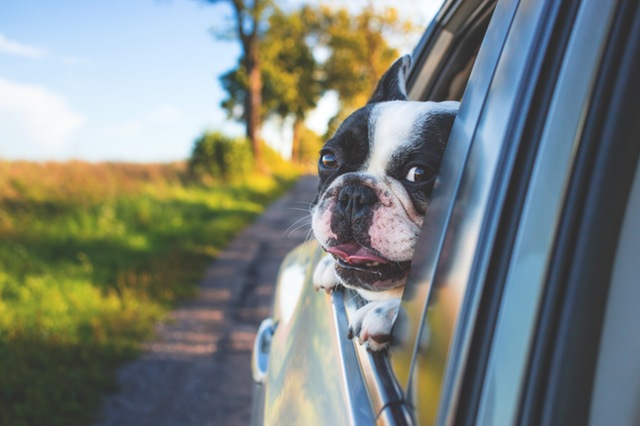 Pet Travel Guide