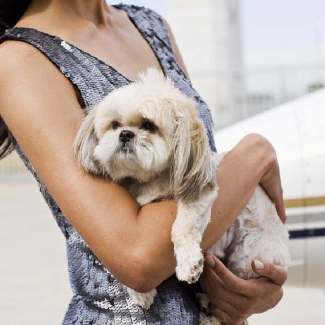 Comforting Pets