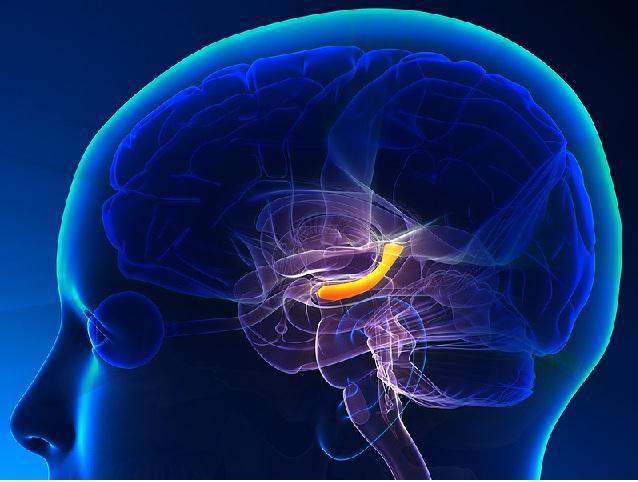 Hippocampus Depression