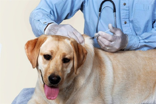 Vaccine for Dogs