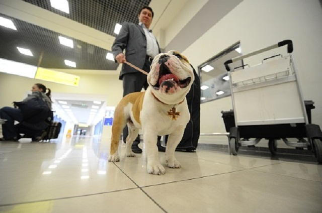 Dogs in Airport