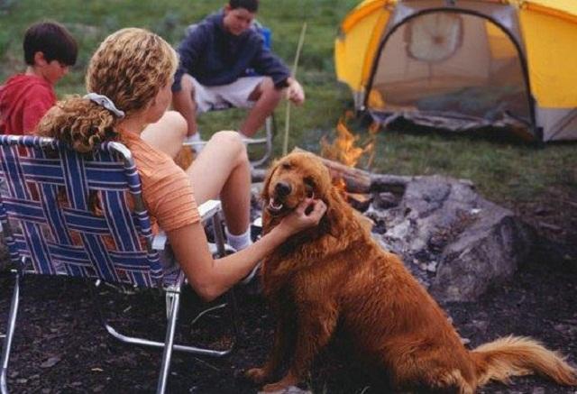 Dog Camping