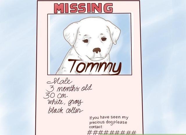 Missing Pet