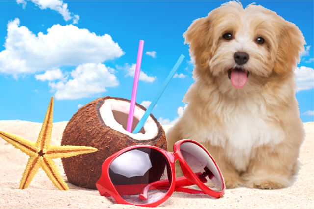 Dog on Summer - Pet's Health Tips for the Summer
