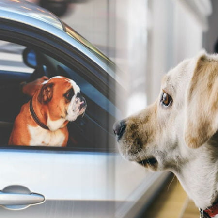 Should You Leave Your Pet Behind Or Bring Them With You When Traveling