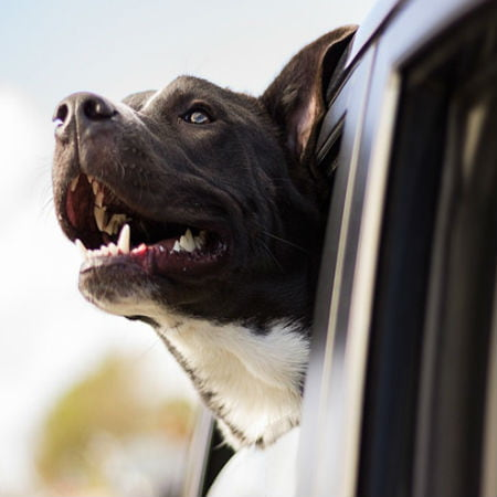 Tips for Safe Pet Travel