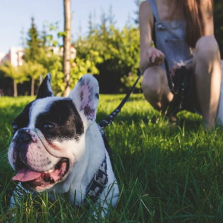 Tips to Consider Before You Start Running with Your Dog