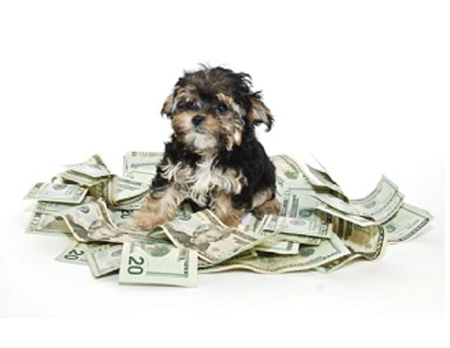 Dog in a Money