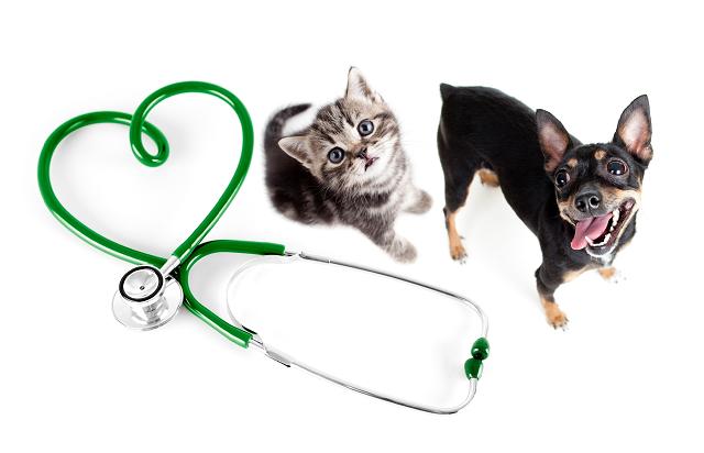 Pet's Health Status