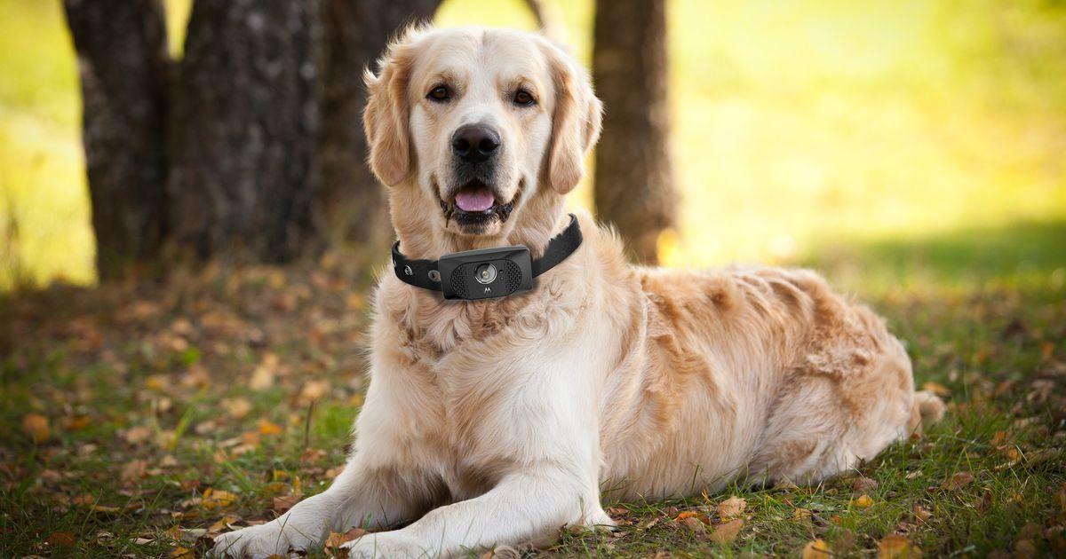 Dog 2 - Lost Dog