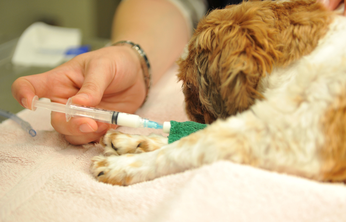 Vaccinating Your Dog - Pet's Health Tips for the Summer