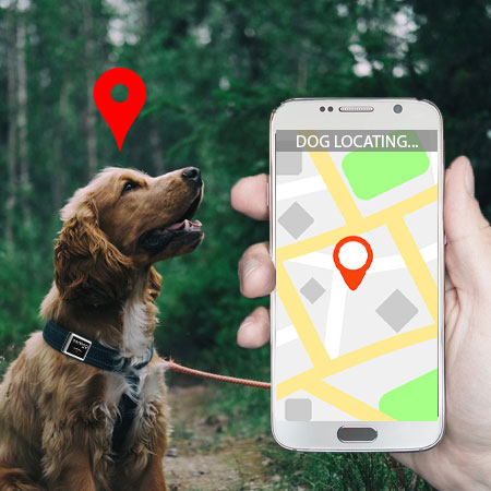 Dog GPS Tracker Benefits