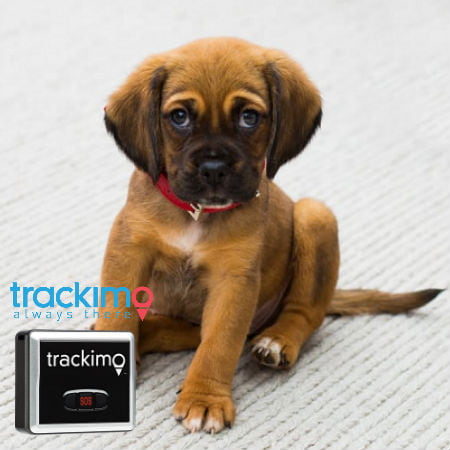 Dog Tracking Chips