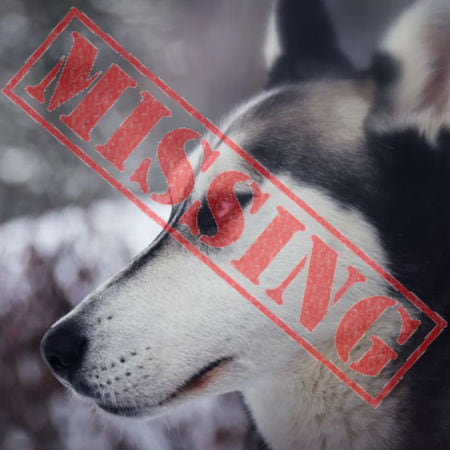 Drones Used in Search of Missing Dog