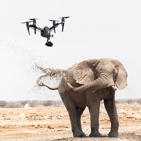 Elephants Go Crazy Around Drones