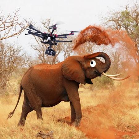 Elephants Go Crazy Around Drones