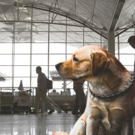 International Travel with Pet
