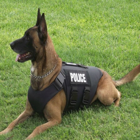 K9 Police Dog Training For Tracking The Missing People