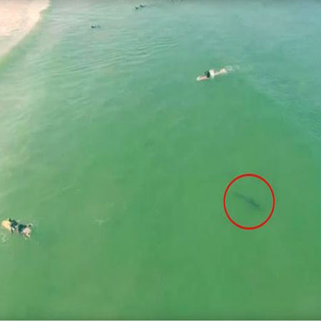 Finding Sharks Using Drones