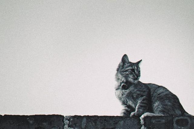 Street-Savvy Pets
