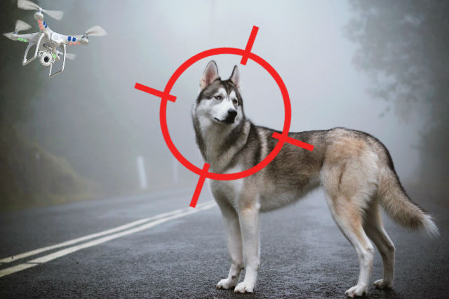 Tracking your Dog