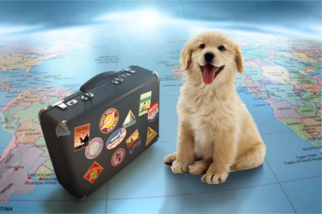Traveling Internationally
