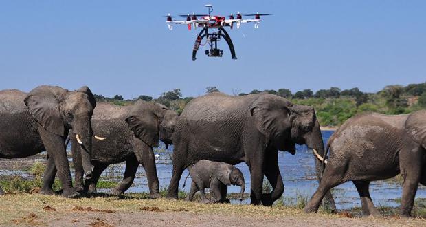 drone-elephant