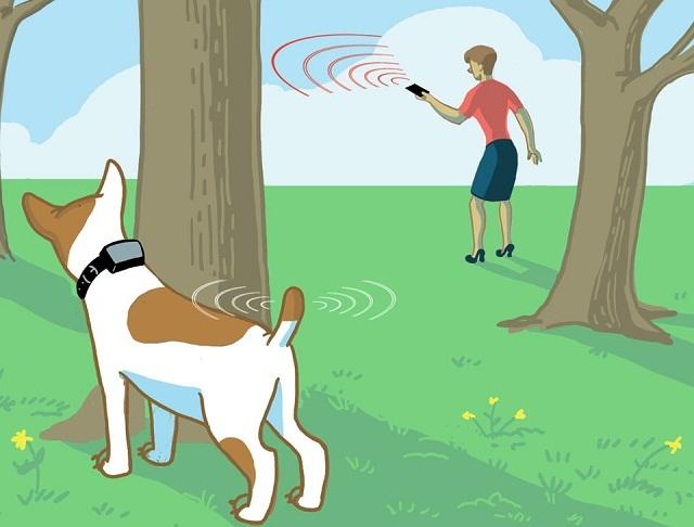 Tracing Pet
