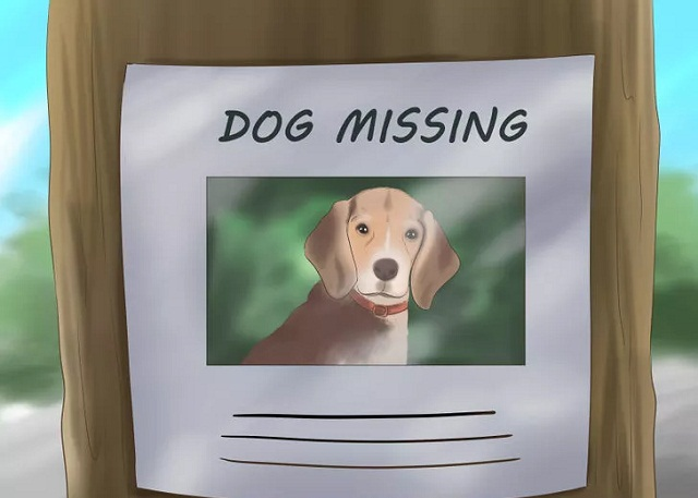 Lost Dog Poster - Tips To Find Lost Pets Quickly