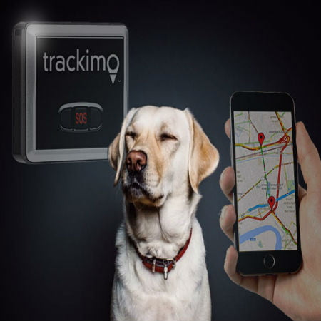 A Buyers Guide to Pet GPS Trackers