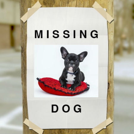 Effective Ways to Find Your Lost Pet part2