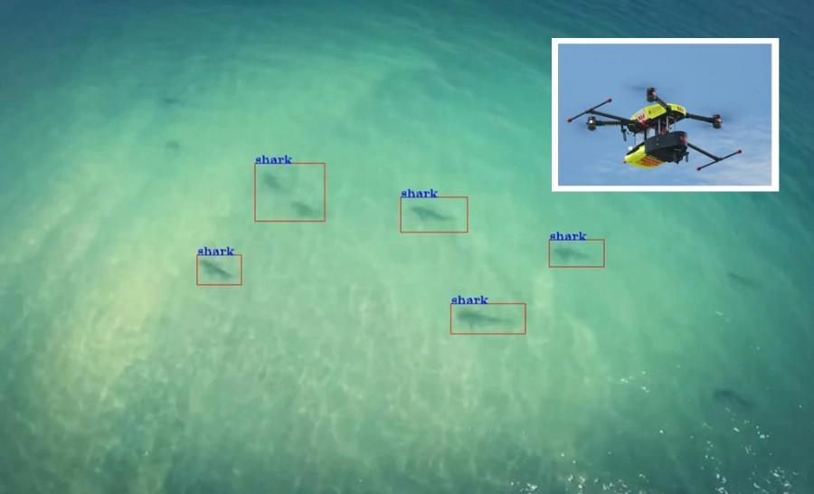 Shark-Detecting-Drones1