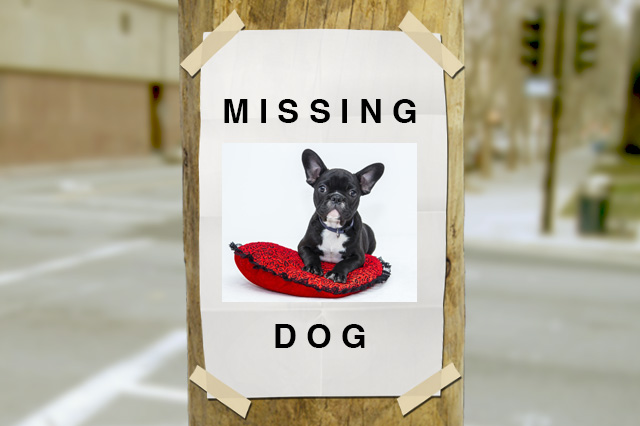 Tips to Find Lost Pet