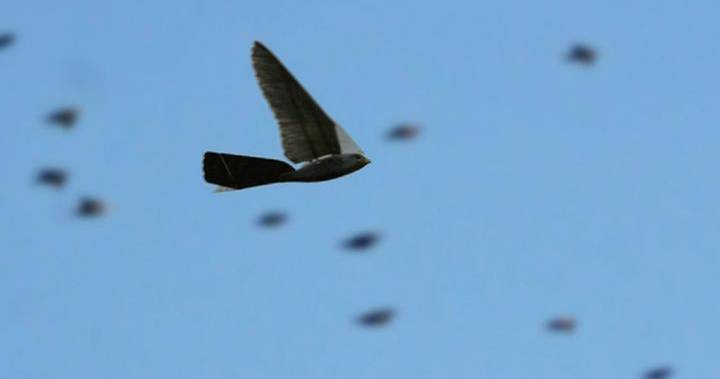 birddrone1