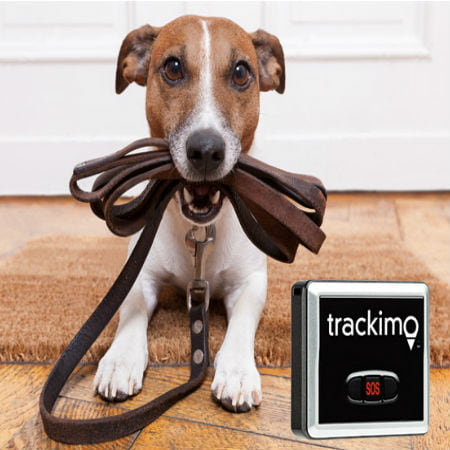 Benefits of Using Pet Tracking