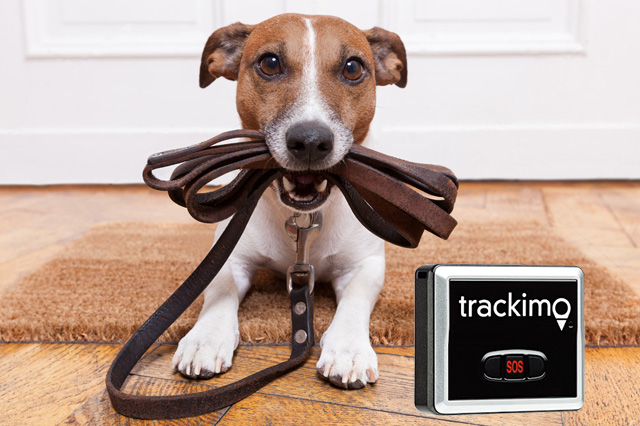 Tracking Pets