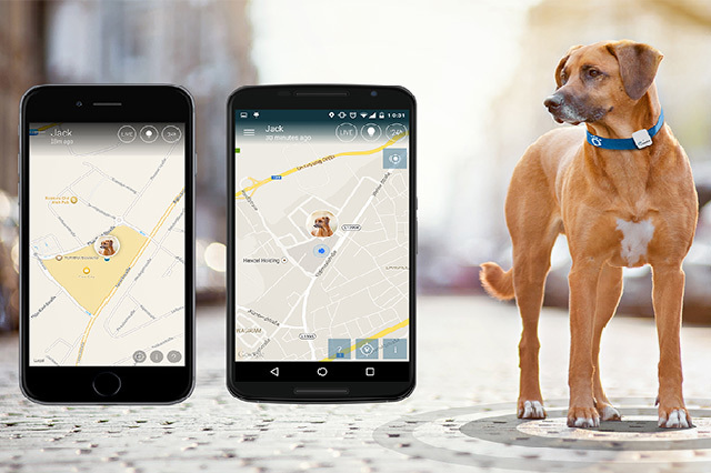 Pet Monitoring Using GPS