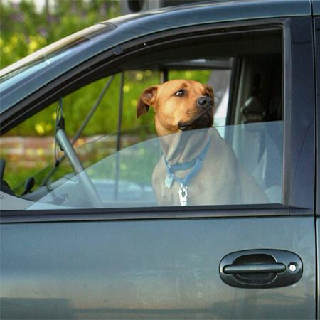 GPS Dog Locator