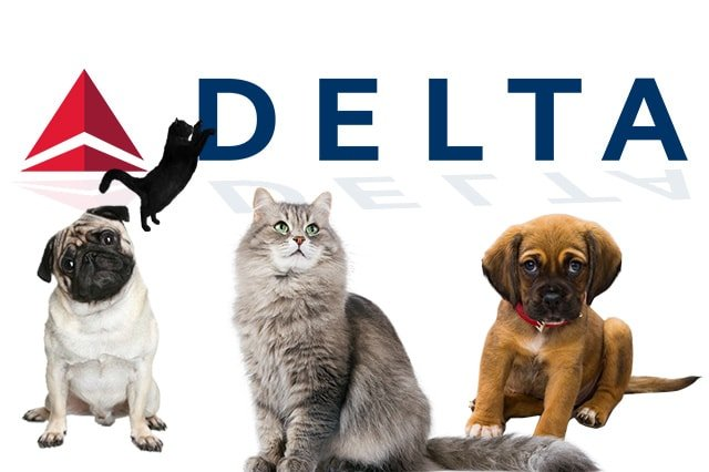 The use of gps tracking for airline pet service trackimo for Delta airlines dogs in cabin